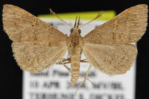 ( - CNCNoctuoidea12877)  @14 [ ] CreativeCommons - Attribution Non-Commercial Share-Alike (2010) CBG Photography Group Centre for Biodiversity Genomics