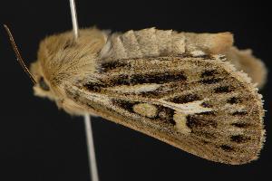 ( - CNCNoctuoidea12938)  @14 [ ] CreativeCommons - Attribution Non-Commercial Share-Alike (2010) CBG Photography Group Centre for Biodiversity Genomics