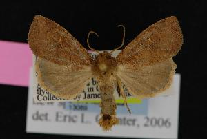 (Apamea gen2sp1 - CNCNoctuoidea13089)  @14 [ ] CreativeCommons - Attribution Non-Commercial Share-Alike (2010) CBG Photography Group Centre for Biodiversity Genomics