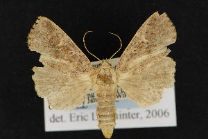 ( - CNCNoctuoidea13090)  @13 [ ] CreativeCommons - Attribution Non-Commercial Share-Alike (2010) CBG Photography Group Centre for Biodiversity Genomics