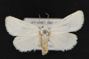 (Redingtonia alba - CNC LEP 00047438)  @14 [ ] Unspecified (default): All Rights Reserved  Unspecified Unspecified