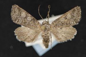 (Lacinipolia agnata - CNC LEP 00047495)  @14 [ ] Unspecified (default): All Rights Reserved  Unspecified Unspecified