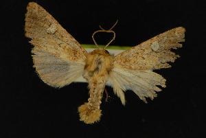 (Tricholita palmillo - NOC14083)  @13 [ ] Unspecified (default): All Rights Reserved  Unspecified Unspecified