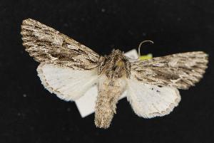 (Fishia nigrescens - NOC14833)  @14 [ ] Unspecified (default): All Rights Reserved  Unspecified Unspecified
