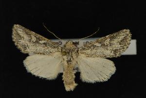 (Rhizagrotis stylata - NOC14090)  @14 [ ] Unspecified (default): All Rights Reserved  Unspecified Unspecified