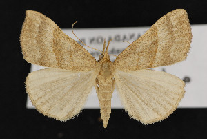 (Hypena atomaria - CNC LEP00052416)  @14 [ ] Unspecified (default): All Rights Reserved  Unspecified Unspecified