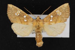 (Papaipema furcata - CNC LEP00052901)  @15 [ ] Unspecified (default): All Rights Reserved  Unspecified Unspecified