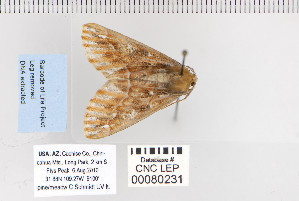 ( - CNCLEP 80231)  @12 [ ] CreativeCommons - Attribution Non-Commercial Share-Alike (2010) Canadian National Collection of Insects, Arachnids and Nematodes Canadian National Collection of Insects, Arachnids and Nematodes
