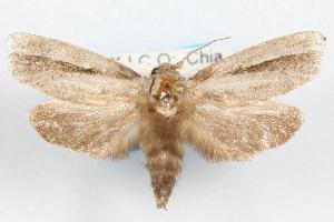 (Acrolophus striatus - DDAV-D607)  @14 [ ] CreativeCommons - Attribution Non-Commercial Share-Alike (2010) CBG Photography Group Centre for Biodiversity Genomics