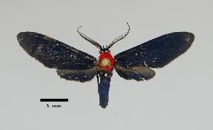 ( - MUSM-ArctVBC560)  @11 [ ] Copyright (2018) Juan Grados Museo de Historia Natural, UNMSM, Lima, Perú