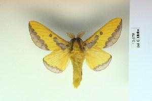 (Mielkesia - BC-CGCM-10.678)  @14 [ ] Copyright (2010) Carlos Mielke Research Collection of Carlos Mielke
