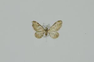 ( - BC-MNHN0695)  @11 [ ] Copyright (2019) Claude Tautel Museum national d'Histoire Naturelle