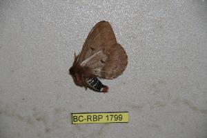 ( - BC-RBP-1799)  @12 [ ] Copyright (2010) Ron Brechlin Research Collection of Ron Brechlin