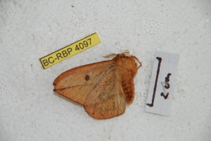 ( - BC-RBP 4097)  @12 [ ] Copyright (2010) Ron Brechlin Research Collection of Ron Brechlin