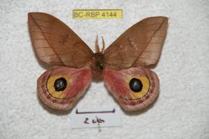 ( - BC-RBP 4144)  @11 [ ] Copyright (2010) Ron Brechlin Research Collection of Ron Brechlin