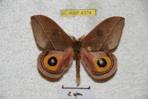 ( - BC-RBP 4374)  @11 [ ] Copyright (2010) Ron Brechlin Research Collection of Ron Brechlin