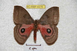 ( - BC-RBP 4376)  @11 [ ] Copyright (2010) Ron Brechlin Research Collection of Ron Brechlin