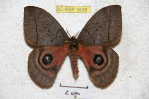 ( - BC-RBP 3536)  @13 [ ] Copyright (2010) Ron Brechlin Research Collection of Ron Brechlin