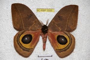 ( - BC-RBP 3555)  @11 [ ] Copyright (2010) Ron Brechlin Research Collection of Ron Brechlin