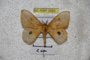 ( - BC-RBP 3583)  @11 [ ] Copyright (2010) Ron Brechlin Research Collection of Ron Brechlin