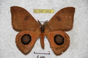 ( - BC-RBP 3622)  @11 [ ] Copyright (2010) Ron Brechlin Research Collection of Ron Brechlin