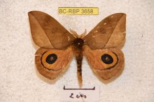 ( - BC-RBP 3658)  @14 [ ] Copyright (2010) Ron Brechlin Research Collection of Ron Brechlin