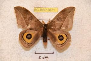( - BC-RBP 3671)  @14 [ ] Copyright (2010) Ron Brechlin Research Collection of Ron Brechlin