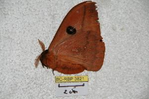 ( - BC-RBP 3821)  @12 [ ] Copyright (2010) Ron Brechlin Research Collection of Ron Brechlin