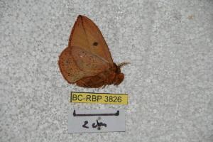 ( - BC-RBP 3826)  @13 [ ] Copyright (2010) Ron Brechlin Research Collection of Ron Brechlin