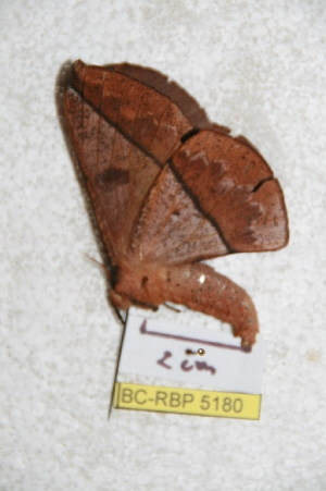 ( - BC-RBP 5180)  @12 [ ] Copyright (2011) Ron Brechlin Research Collection of Ron Brechlin