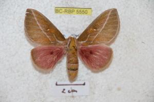 ( - BC-RBP 5550)  @12 [ ] Copyright (2010) Ron Brechlin Research Collection of Ron Brechlin
