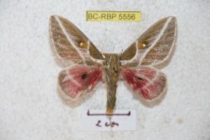 ( - BC-RBP 5556)  @13 [ ] Copyright (2010) Ron Brechlin Research Collection of Ron Brechlin