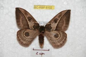 ( - BC-RBP 6102)  @15 [ ] Copyright (2010) Ron Brechlin Research Collection of Ron Brechlin