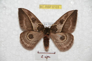 ( - BC-RBP 6103)  @14 [ ] Copyright (2010) Ron Brechlin Research Collection of Ron Brechlin