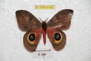 ( - BC-RBP 6145)  @14 [ ] Copyright (2010) Ron Brechlin Research Collection of Ron Brechlin