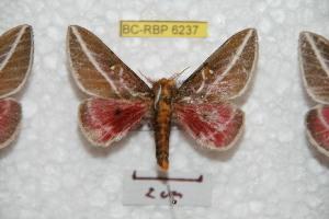 ( - BC-RBP 6237)  @12 [ ] Copyright (2010) Ron Brechlin Research Collection of Ron Brechlin