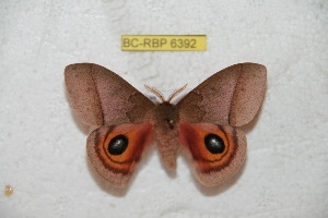 ( - BC-RBP 6392)  @11 [ ] Copyright (2012) Ron Brechlin Research Collection of Ron Brechlin