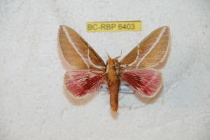 ( - BC-RBP 6403)  @13 [ ] Copyright (2012) Ron Brechlin Research Collection of Ron Brechlin