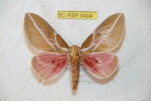 ( - BC-RBP 6404)  @14 [ ] Copyright (2012) Ron Brechlin Research Collection of Ron Brechlin