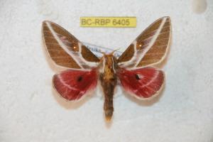 ( - BC-RBP 6405)  @13 [ ] Copyright (2012) Ron Brechlin Research Collection of Ron Brechlin