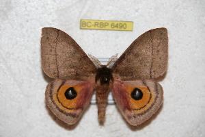 ( - BC-RBP 6490)  @14 [ ] Copyright (2012) Ron Brechlin Research Collection of Ron Brechlin