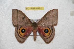 ( - BC-RBP 6491)  @11 [ ] Copyright (2012) Ron Brechlin Research Collection of Ron Brechlin