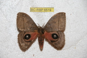 ( - BC-RBP 6519)  @11 [ ] Copyright (2012) Ron Brechlin Research Collection of Ron Brechlin