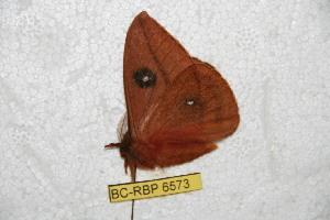 ( - BC-RBP 6573)  @12 [ ] Copyright (2012) Ron Brechlin Research Collection of Ron Brechlin