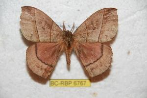 (Prohylesia yungana - BC-RBP 6767)  @12 [ ] Copyright (2012) Ron Brechlin Research Collection of Ron Brechlin