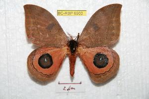 ( - BC-RBP 6903)  @15 [ ] Copyright (2012) Ron Brechlin Research Collection of Ron Brechlin