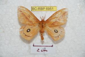 ( - BC-RBP 6951)  @13 [ ] Copyright (2012) Ron Brechlin Research Collection of Ron Brechlin