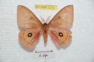 ( - BC-RBP 7273)  @12 [ ] Copyright (2013) Ron Brechlin Research Collection of Ron Brechlin