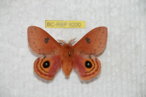 ( - BC-RBP 8200)  @13 [ ] Copyright (2014) Ron Brechlin Research Collection of Ron Brechlin