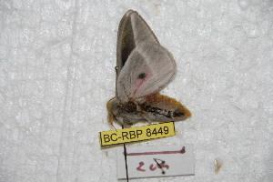 ( - BC-RBP 8449)  @12 [ ] Copyright (2014) Ron Brechlin Research Collection of Ron Brechlin